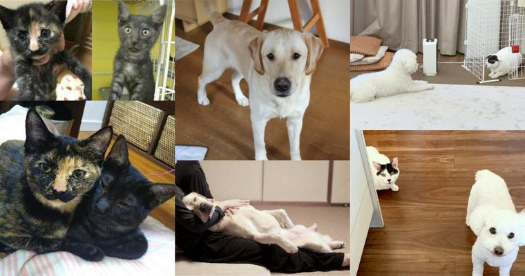 引っ越しで置き去りにされた猫/脱走癖があった本当の理由 保護犬猫を迎えた家族たちの話