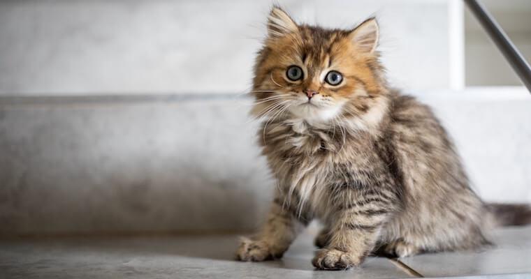 猫もしゃっくりをする? 嘔吐の前触れとの違いなどを獣医師が解説