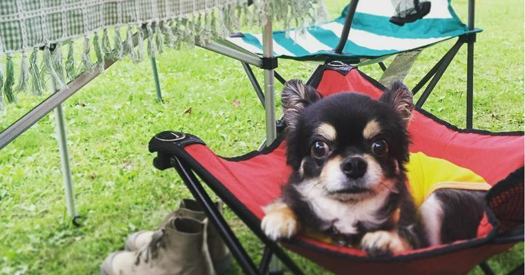 全国のペットと行けるキャンプ場オススメ20選 愛犬と全国各地を巡ろう!