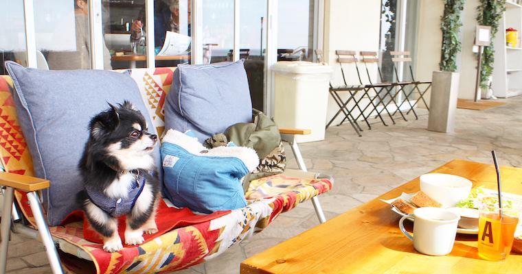 湘南の人気ドッグカフェ&犬連れ可能レストラン17選 平塚・藤沢・江ノ島・茅ヶ崎など