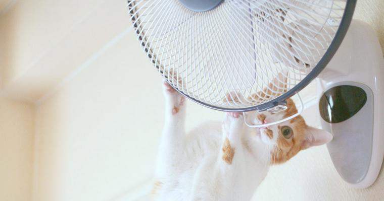 猫が扇風機を好きなのは涼しいからではない!? 事故を防ぐ安全対策を紹介