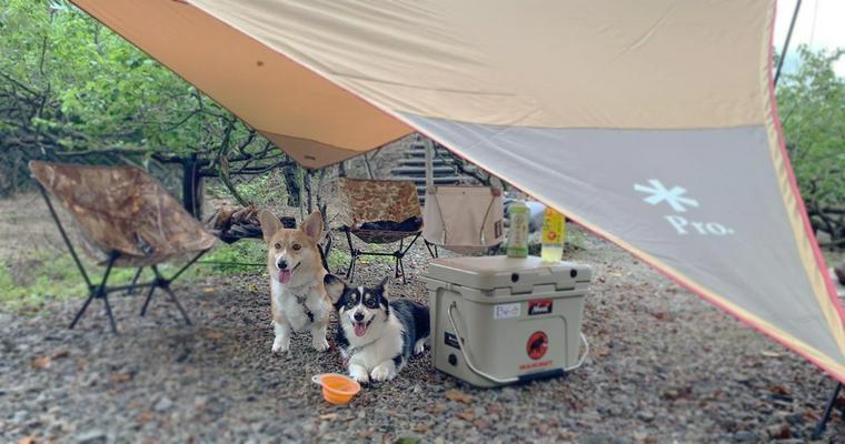 犬とお出かけ岐阜編|自然溢れる中で愛犬と楽しめる人気スポットを紹介