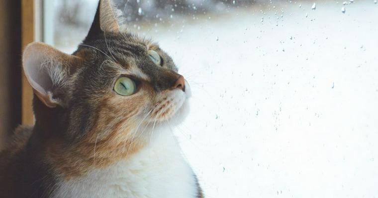猫は雨の日に顔を洗うって本当? 帰ってこない理由から正しい飼い方を解説