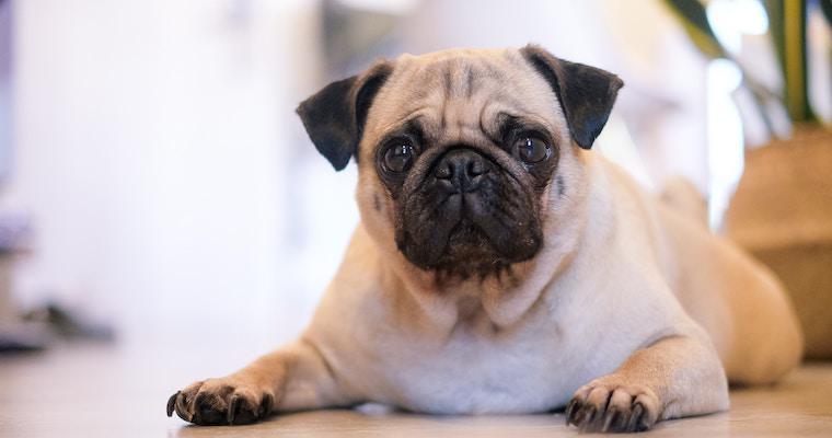 犬の胃腸炎とは? 原因や症状、治療法などを獣医師が解説
