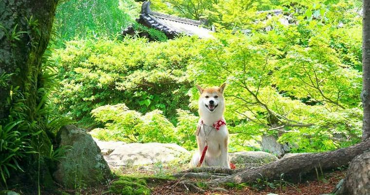 犬とお出かけ三重編 鳥羽水族館など犬連れで楽しめる人気の観光スポットをご紹介