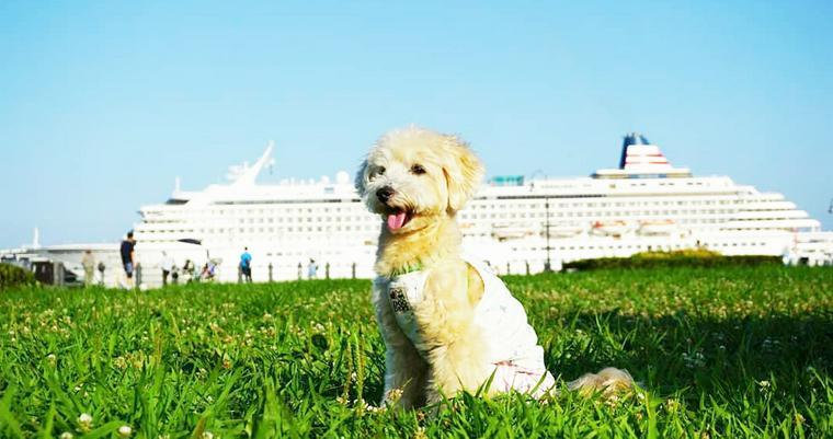 犬とお出かけ横浜編 横浜港の海風を感じながらお出かけ