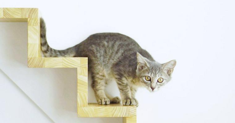 猫部屋で保護活動はじめました【今日のシロップ】