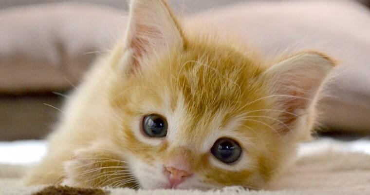 猫の免疫力を高める方法や低下する理由などについて獣医師が解説