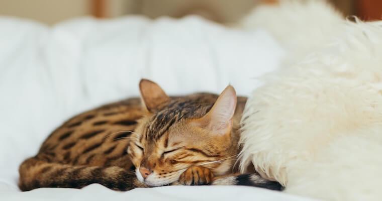 猫の点滴|種類や自宅でのやり方などを獣医師が解説