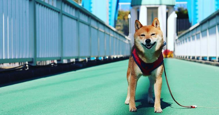 犬とお出かけ茨城編|ひたち海浜公園やフラワーパークなどペット同伴で楽しめるスポットをご紹介