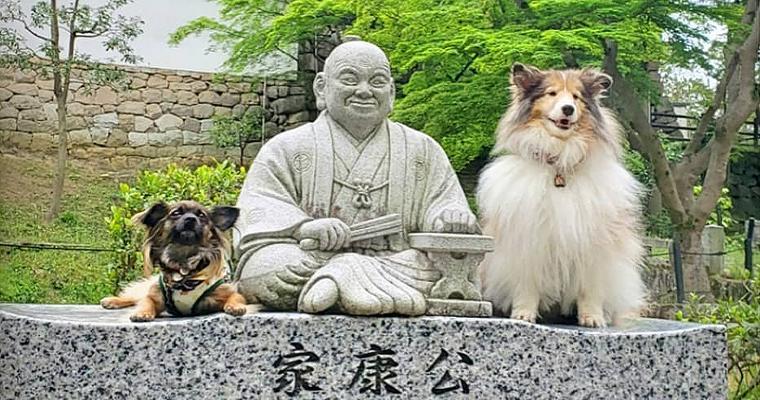 犬とお出かけ愛知編 名古屋だけじゃないペット同伴OKの人気スポットを紹介