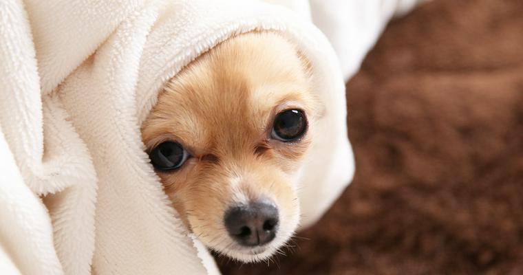 トリマーがおすすめする犬用タオル7選 超吸水やマイクロファイバー、使い方も紹介