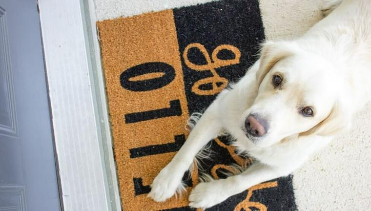 犬の大腸炎とは? 症状や原因、治療法などを獣医師が解説