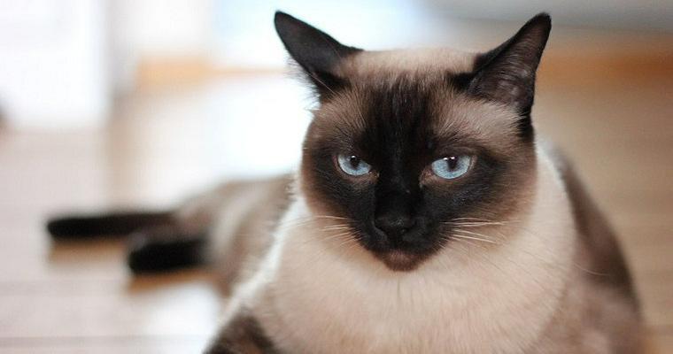 猫も夏バテをする? ご飯を食べない場合の対策や予防方法を紹介