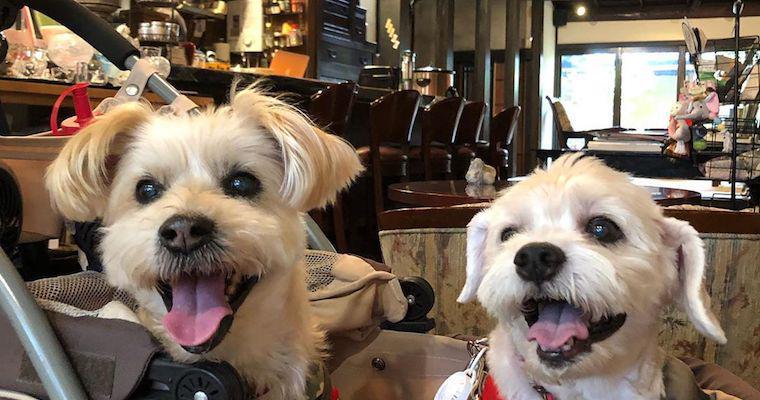 京都のドッグカフェ&レストランおすすめ14選! 人気の観光地で愛犬との思い出を