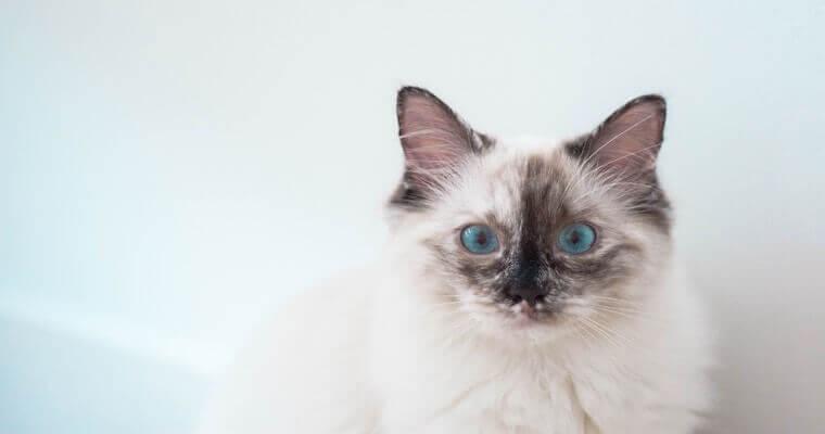 猫は避妊・去勢すべき? 手術の時期や方法、費用などを獣医師が解説