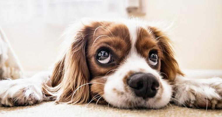 トリマーおすすめ犬用ブラシ10選 人気のファーミネーターなど紹介