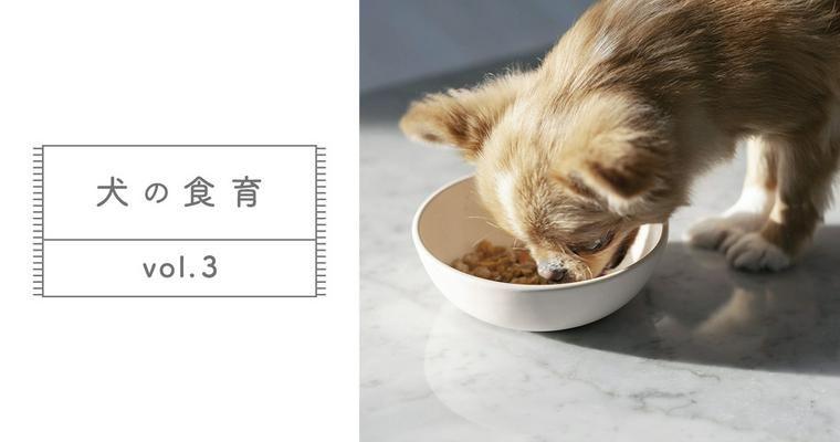 【犬の食育 Vol.3】ウェットフードが歯に悪いって本当?