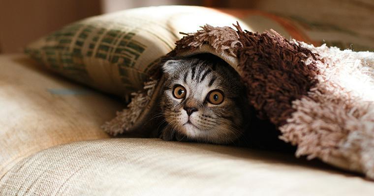 寒がりな愛猫のために 冬の寒さ対策や注意すべき病気について解説
