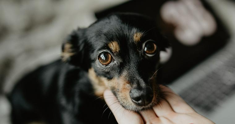 犬があごのせする理由とは? その意味や教え方も解説