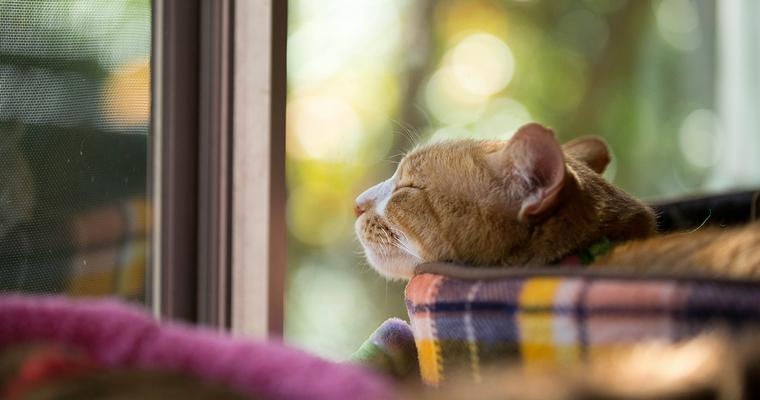 猫に暖房は必要? 適温や注意点、おすすめの防寒グッズをご紹介