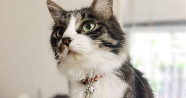 猫に迷子札は常識! なぜ必要? おしゃれで軽いオススメの迷子札を紹介
