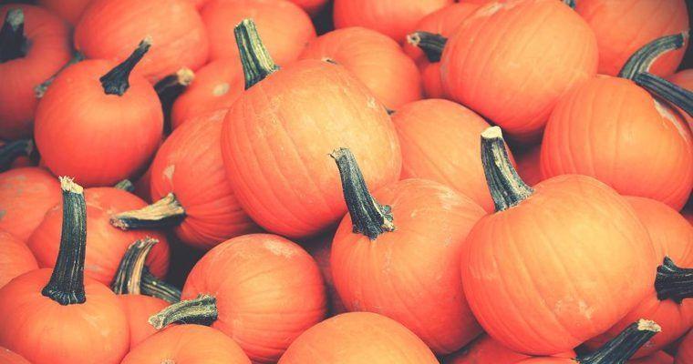 猫はかぼちゃを食べても大丈夫! 与えるメリットや方法、注意点を解説
