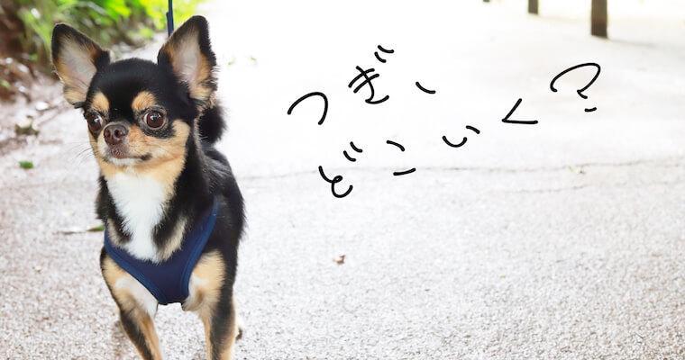 【つぎ、どこ行く?】ペット同伴お出かけ初心者の方にもおすすめイベント&宿5選!