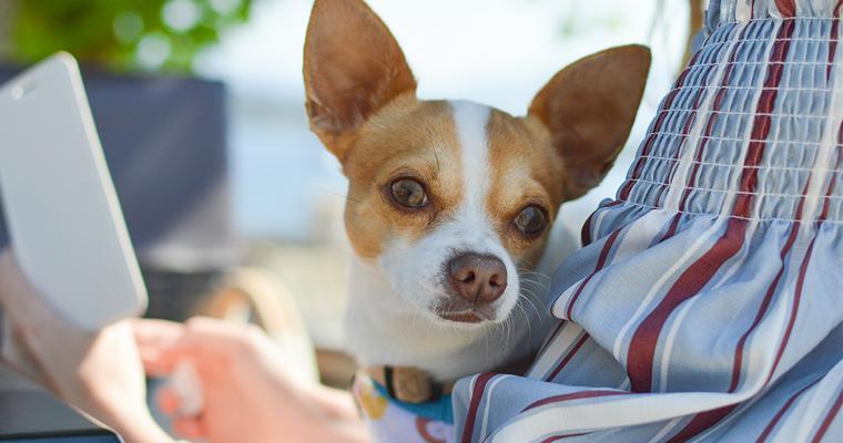犬のスリングおすすめ7選 デニム素材のおしゃれなものや中型犬でも使えるものまで