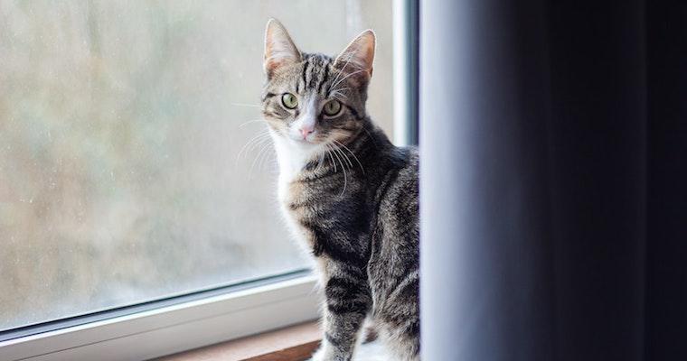 猫もストレスを感じている? ストレスサインや解消法など獣医師が解説