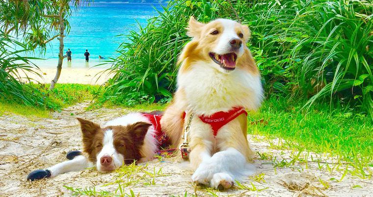 【FUN LETTER】飛行機を利用して愛犬と沖縄へ。行きたくなるお話を聞きました。
