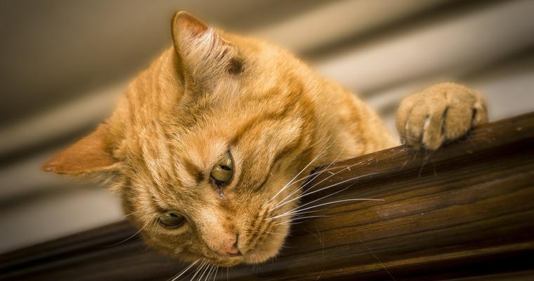 猫のけりぐるみおすすめ7選 人気のエビや魚のかわいいものから、おしゃれなものまで