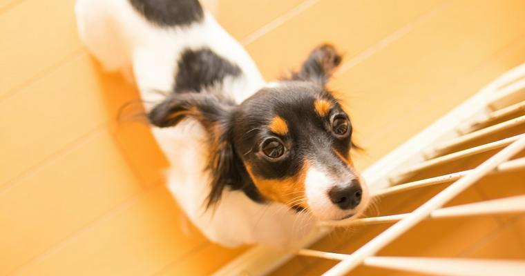 おすすめの犬用ケージ おしゃれな木製のものや折り畳み可能なタイプなど
