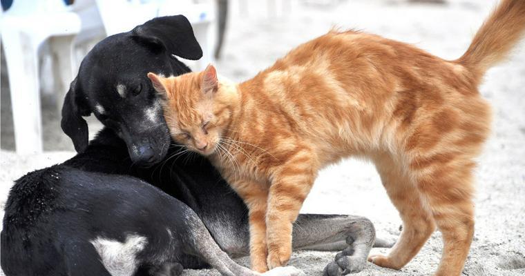 動物保護団体を支援しよう! 寄付の仕方、犬猫を迎える際の注意点を解説