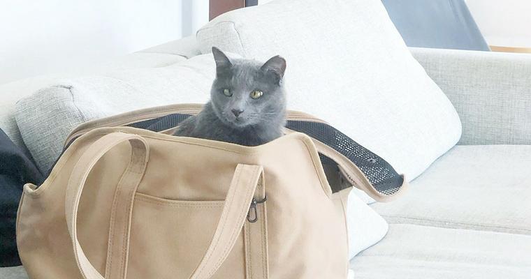 バイヤーおすすめ猫のキャリーバッグ おしゃれなものから機能的なリュック型まで