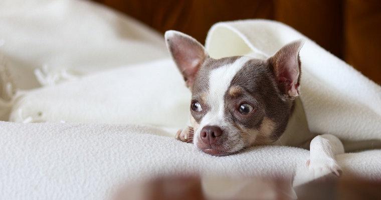 愛犬を静電気から守るために 防止グッズなど対策を紹介