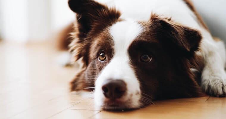 犬の粘液便とは? 原因や対処法などを獣医師が解説