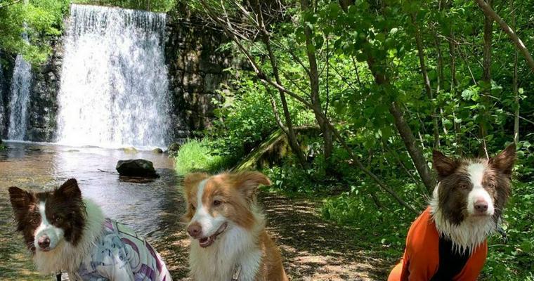 愛犬と軽井沢旅行おすすめスポット15選 雨天時の施設もあり