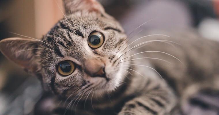 猫がやけど(熱傷)を負ったら? 応急処置や治療法などを獣医師が解説