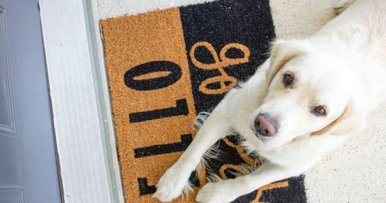 犬が自分の足をかむ・舐める理由、対処法など行動診療科獣医師が解説