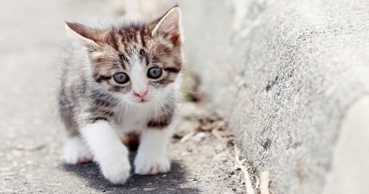 猫の虫下しとは? 虫や薬の種類、症状などを獣医師が解説