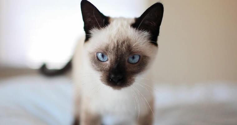 猫の気管支炎とは? 原因や症状、治療法などを獣医師が解説