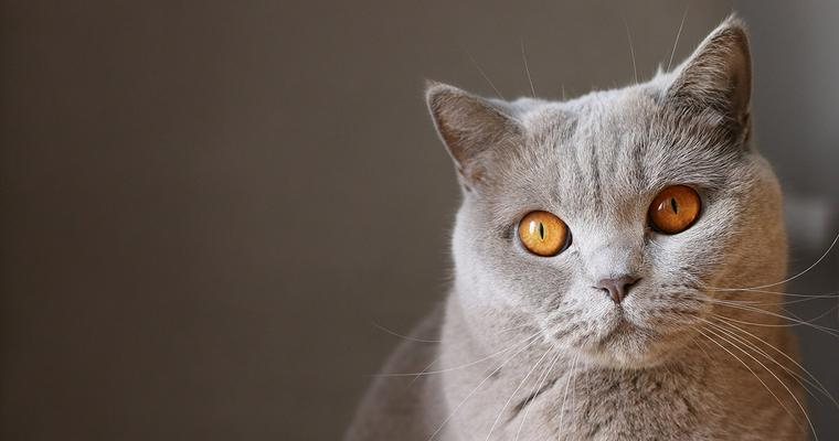 冬の猫ハウス ドーム型やスツール型、猫ちぐらなどおすすめをバイヤーが紹介