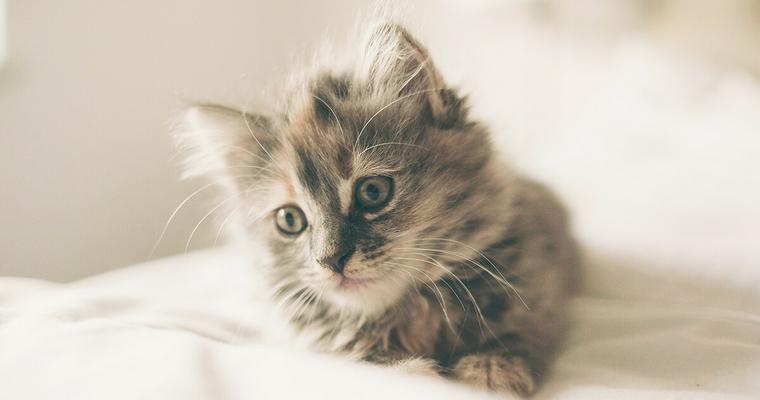 猫のケージカバーを使うメリットは? おすすめのグッズもご紹介