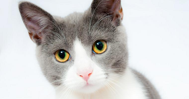 猫の目の色は何種類? 性格への影響や色の変化について解説