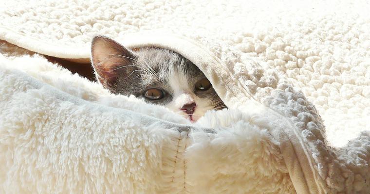バイヤーおすすめ猫の寝袋 寒い冬に嬉しいくつ下型から移動に便利なバッグ型まで