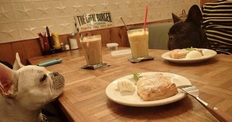 表参道・原宿エリアのおすすめドッグカフェ10選 愛犬とのランチやお茶に
