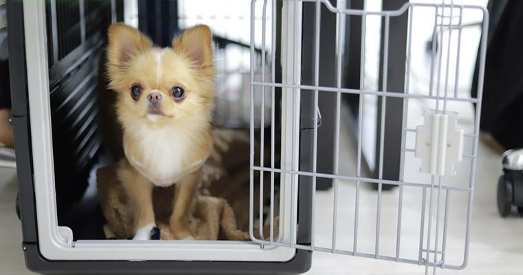 車で使える犬のケージおすすめ7選 持ち運びや固定できるタイプなど紹介