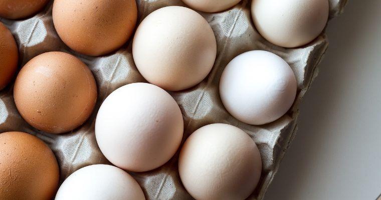 犬は卵を食べて大丈夫! 与え方、生卵やアレルギーなどの注意点も