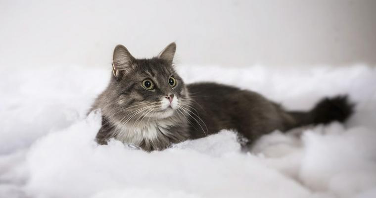 おすすめの猫ケージ10選 木製のおしゃれなものから増設拡張できるもの、大型、持ち運び用など